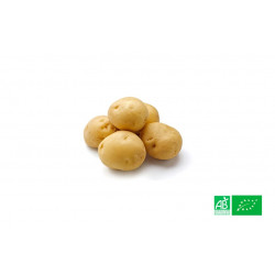 Pomme de terre Grenaille primeur Alsace Lorraine