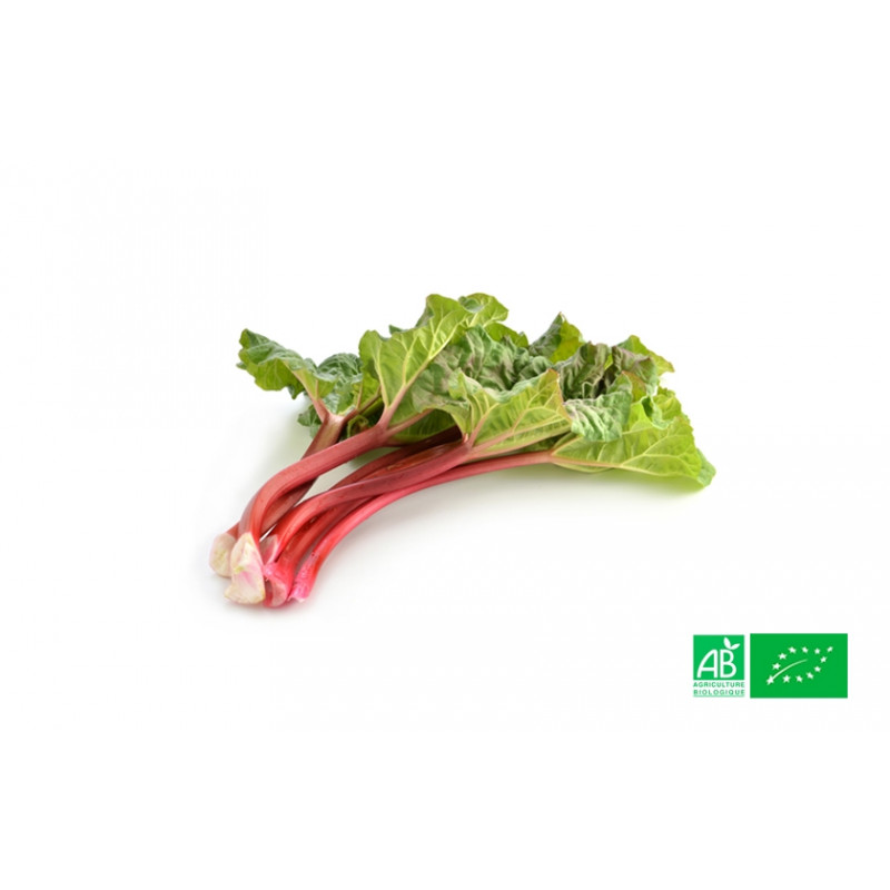 Rhubarbe bio cultivées selon les normes d'agriculture biologique dans les champs de la ferme bio VEGETAL RESPEKT en Moselle